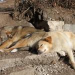 Две собаки сладко спят на солнце