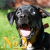 Осложнения после прививки у собак, электронный журнал-альманах о собаках