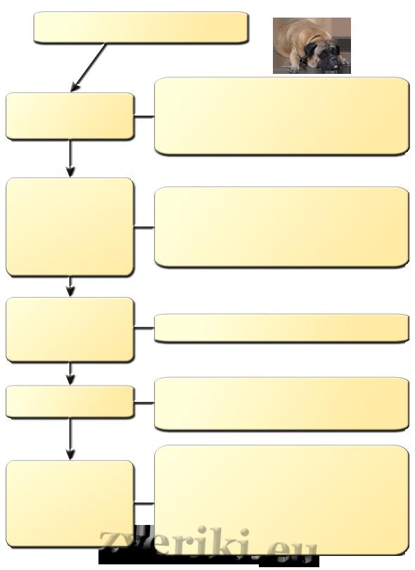 Схема: диагностика пироплазмоза