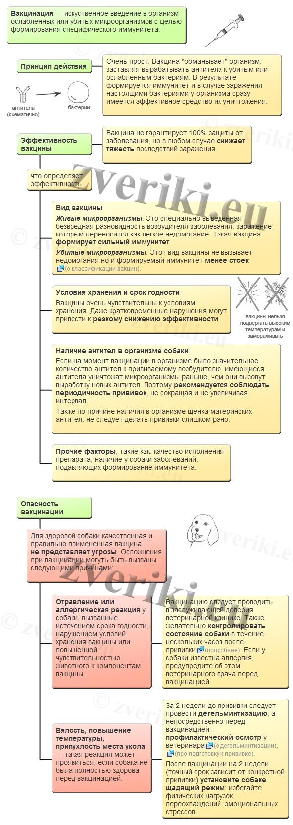 схема введения прививок